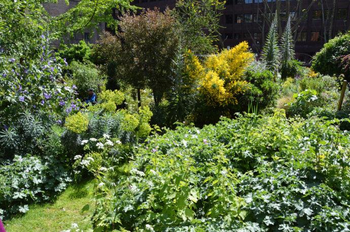 Nettles, echiums, euphorbias, geraniums, hibiscus… a real plantsman's garden.