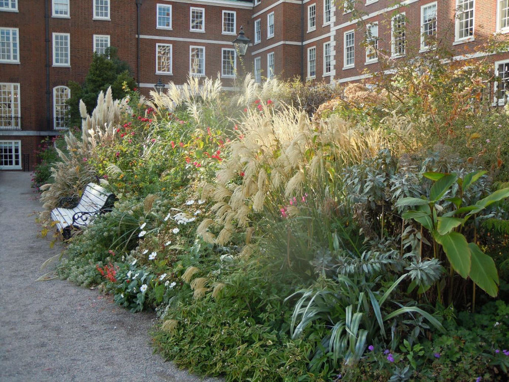 The High Border: Miscanthus, Astelia, Canna & Clematis, to name just a few